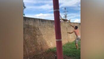 VÍDEO: homem joga cachorro do outro lado de muro durante churrasco em família
