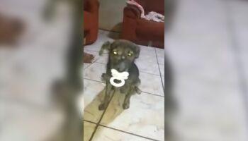 VÍDEO: cachorrinho que chupa chupeta está 'dodói' e precisa de ajuda