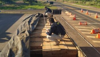 PRF apreende madeira com documentação ambiental irregular em MS
