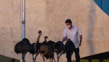 NOTÍCIA QUE VAI MUDAR O MUNDO: Bolsonaro é bicado por ema no Alvorada