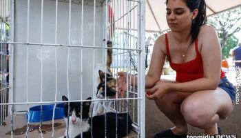 Agendamento on line para castração de gatos é retorna de forma gradativa no CCZ