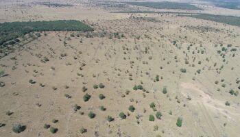 Paulista é autuado em R$ 113 mil por desmatamento em Coxim