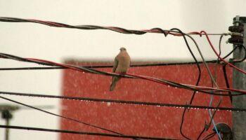 Chuva ameniza calorão e tempo seco neste sábado em MS