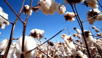 Preço do algodão sobe no campo e roupas podem ficar mais caras
