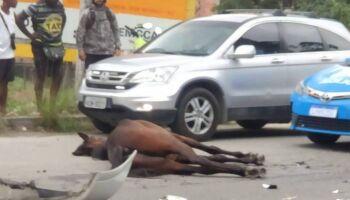 VÍDEO: cavalo é atropelado por carro e rodopia no ar no RJ (imagens fortes)
