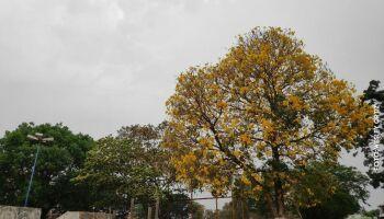 Chove ou não chove? Previsão aponta que hoje tem em MS!