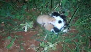 VÍDEO: mulher abandona filhotinhos de gatos em porta de morador em Ivinhema