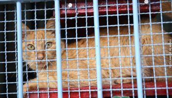 Castração de felinos no CCZ está de volta; saiba como agendar