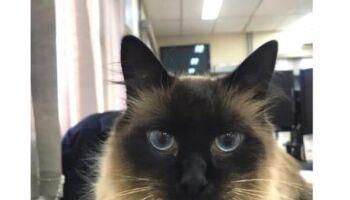 Se achar, é melhor devolver: mascote da PF está desaparecido em Ponta Porã
