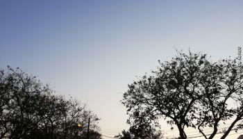 Prefeitura doa 7 mil mudas de árvores frutíferas para campo-grandenses