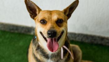 Em Campo Grande, shopping realiza ação on-line para adoção de animais