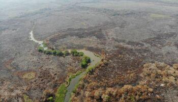 Pescadores se une para tentar ressuscitar pantanal incendiado