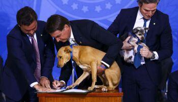 Com cachorro no colo, Bolsonaro sanciona pena maior para maus-tratos a animais