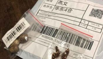 Ministério da Agricultura vai investigar 'sementes misteriosas' vindas da China