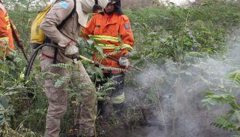 Força-tarefa em MS intensifica ações e controla focos de calor no Pantanal