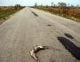 MPF move ação judicial para garantir travessias aos animais do pantanal
