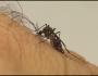 Em 2018, foram notificados mais de 9 mil casos de dengue em MS