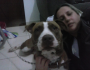 Pitbull que matou bebê de 8 meses era o 'xodó da família' em MS