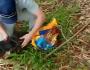 Cachorro morre após passar quase três dias abandonado dentro de saco plástico
