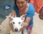 Mulher que alimentava cães e moradores de rua é queimada viva