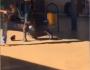 VÍDEO: passageiro 'caloteiro' cai na porrada com segurança e é preso