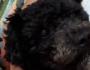 Cachorro morre após ser atingido em tiroteio