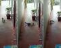Resgate felino! Gato heroico ataca cobra venenosa para salvar família
