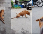VÍDEO: cachorro finge ter a pata quebrada para conquistar carinho e comida
