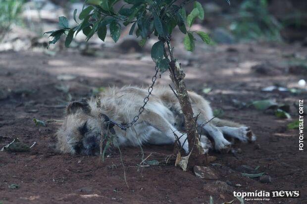 Despesas com resgate de animais devem sair do bolso de agressores, defendem ONGs