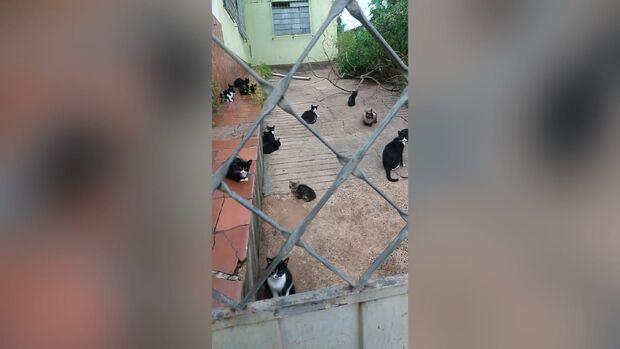 Idosa morre e gatinhos ficam abandonados no São Francisco