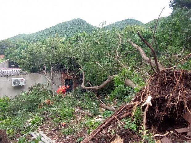 Duas casas são atingidas por quedas de árvores de grande porte em Corumbá