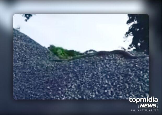 Vídeo: em menos de 48H, duas sucuris aparecem em Rio Brilhante e mostram que aqui é MS!
