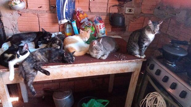 Idosa pede ajuda para alimentar 27 gatinhos na Vila Marli
