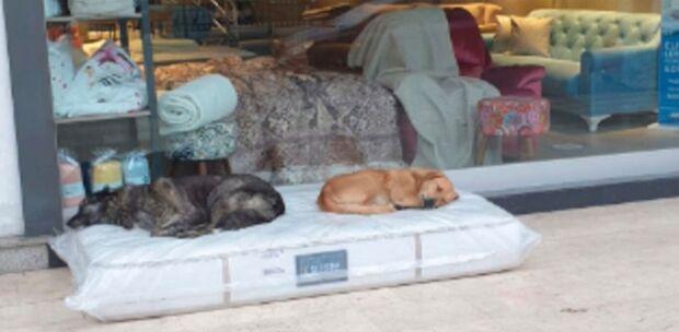 Dono de loja põe colchões para cães de rua dormirem e comove vizinhança