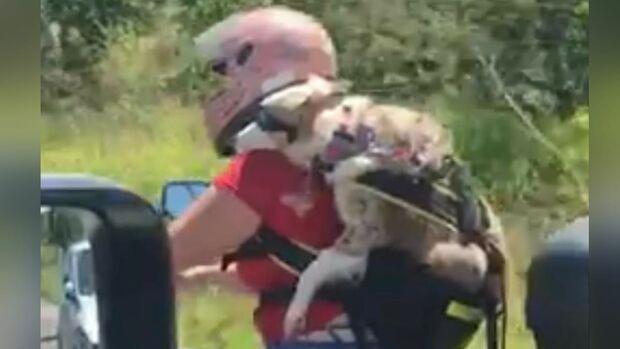 Vídeo: dog de óculos de sol anda de moto no meio da Tamandaré