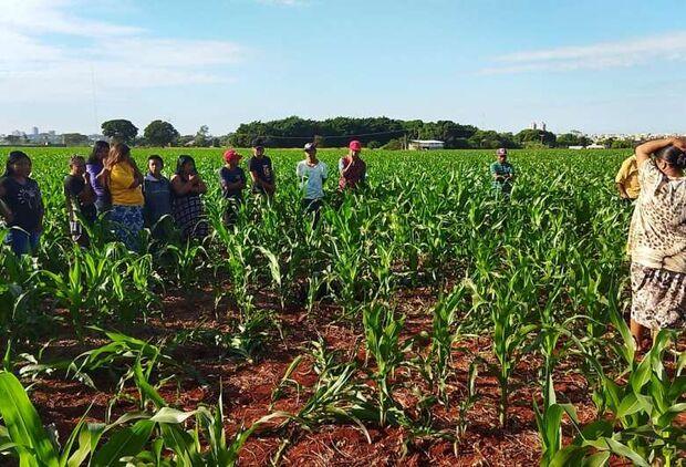 Corpo é encontrado em plantação de milho em Dourados