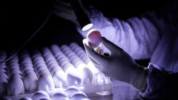 ButanVac: instituto vai usar 20 milhões de ovos de galinha para produzir 40 milhões de vacinas
