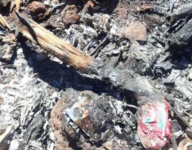 Muita maldade! Idoso queima filhotes de cachorro vivo e amarra outros em saco plástico