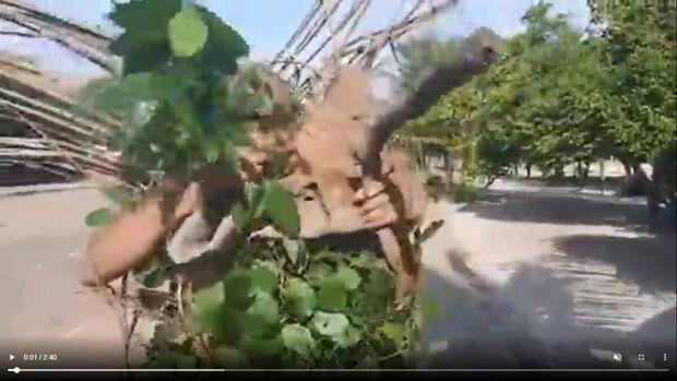 Vídeo: Camuflado, deputado e pastor vai para mata encontrar assassino Lázaro