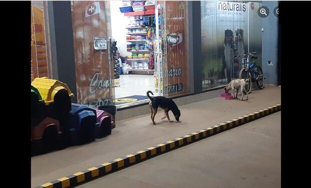 Pet shop comove ao deixar água e ração para animais de rua em Campo Grande