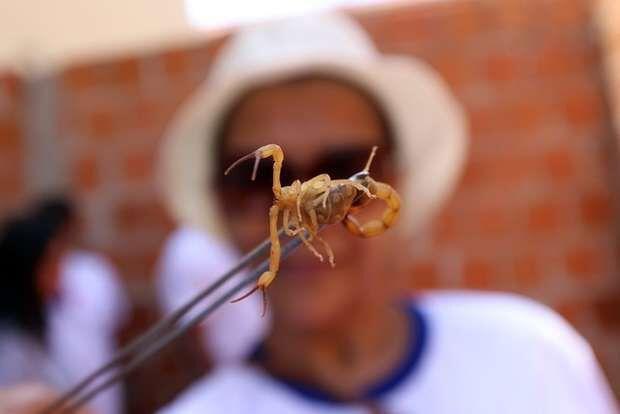 Jornalista se recupera em casa após três picadas de escorpião em MS