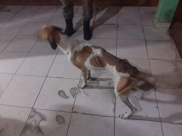 PMA resgata cinco cachorros passando fome e com sarna em Aquidauana