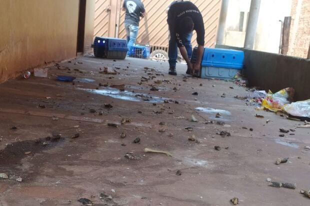 Mulher é indiciada após deixar cães sem água e comida por dois meses no Tijuca