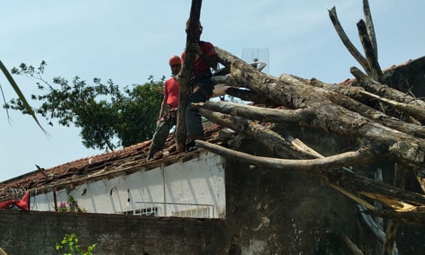 Árvore cai sobre casa e destrói parede, muro e telhado