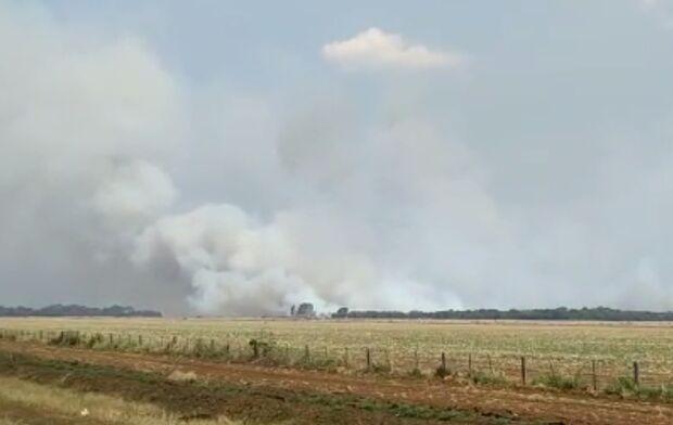 Vídeo: aeronave militar cai em área privada no Indubrasil, em Campo Grande