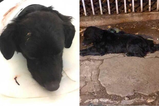 CCZ 'tortura' cachorro e causa revolta em Campo Grande