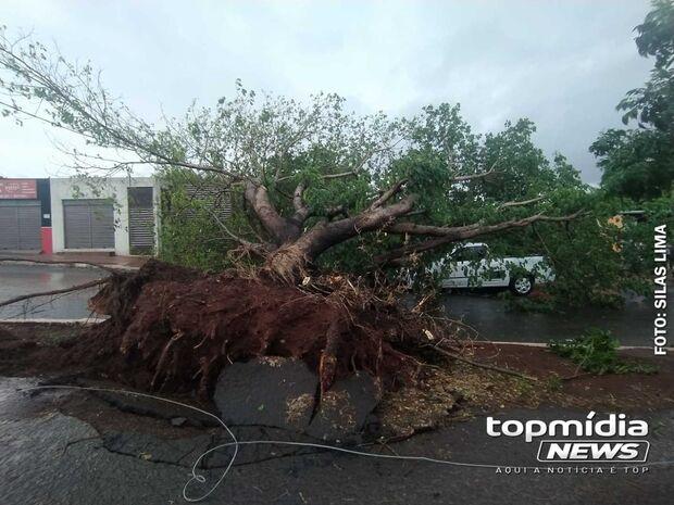 Árvore desaba e deixa moradores sem energia na Rua da Divisão