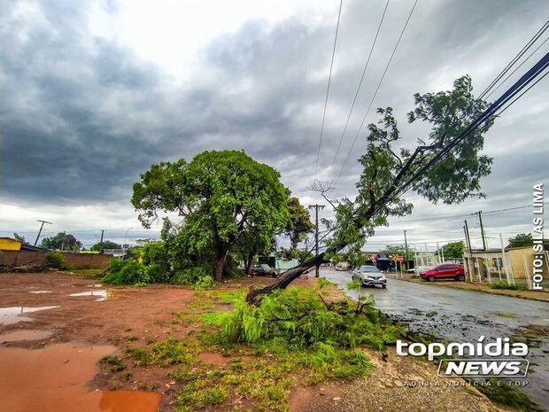 Corpo de Bombeiro registra 96 ocorrências de quedas de árvores ou galhos em Campo Grande