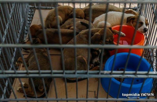 Projeto obriga pet shops a instalarem câmeras de monitoramento em Campo Grande
