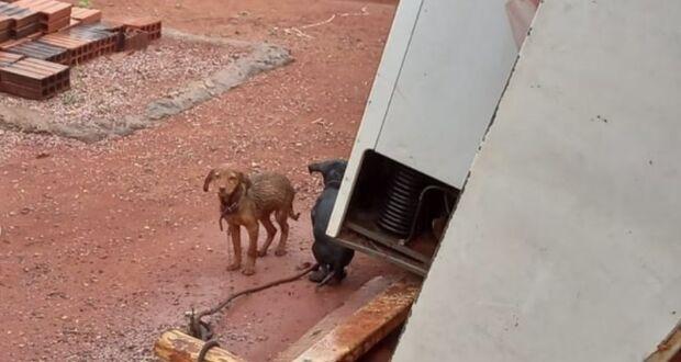 Dois são presos por maus-tratos a sete cachorros em MS